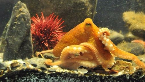 Ucluelet Aquarium - Come pay a visit!