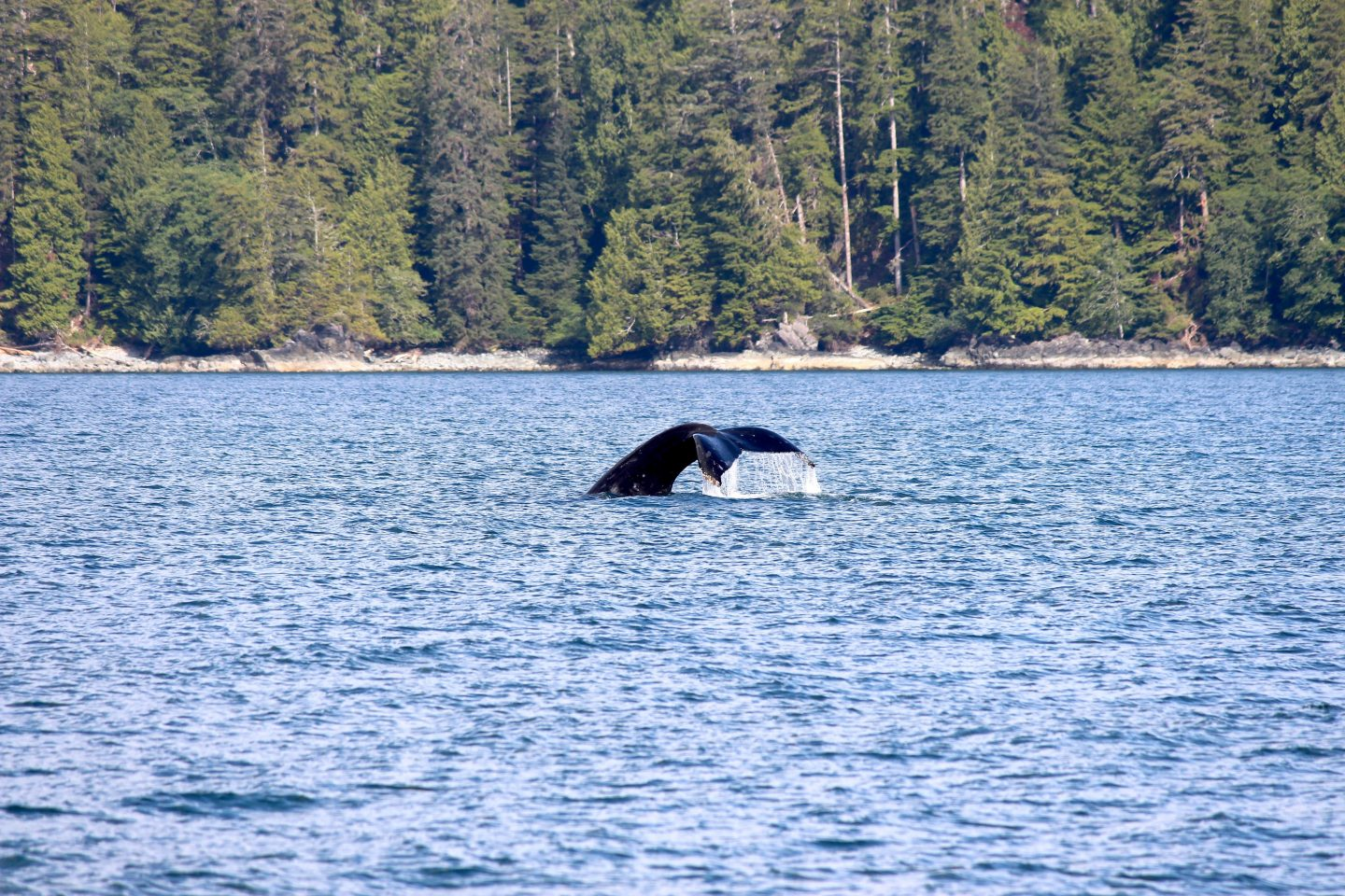 Ucluelet Whale Watching & Wildlife Tours